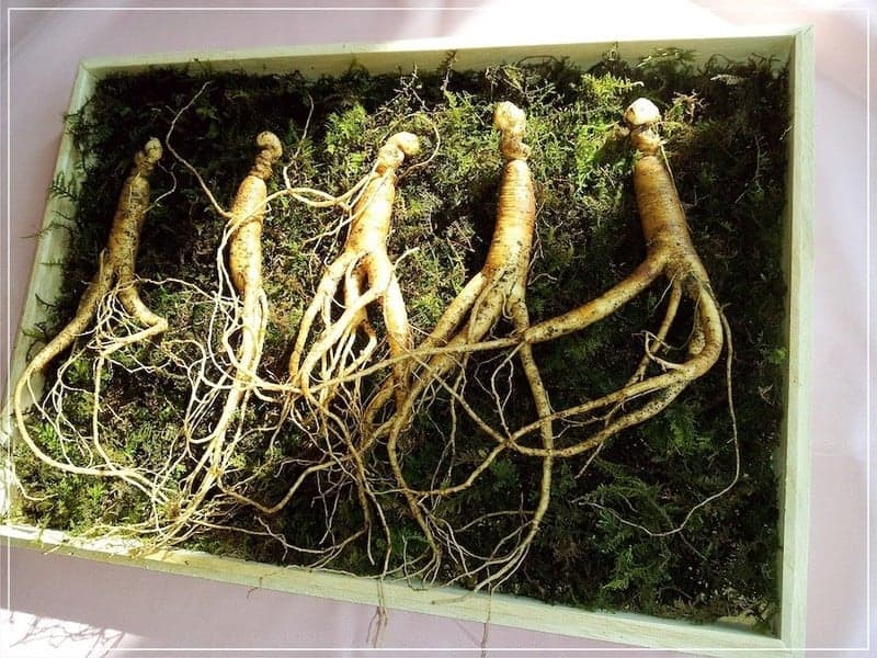 ценные корни женьшеня в ящике