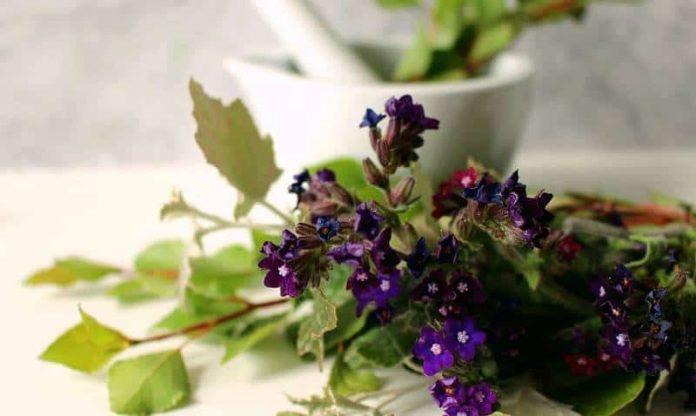 лекарственное сырье растений