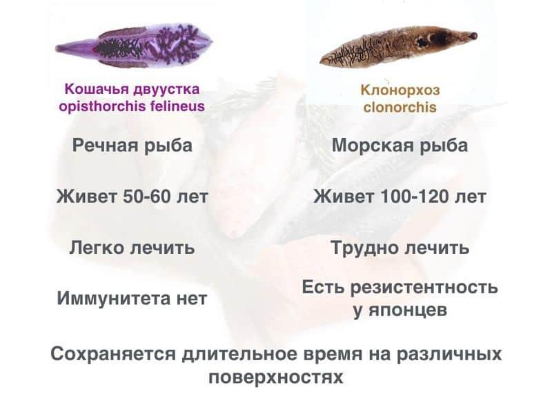 Описторхоз