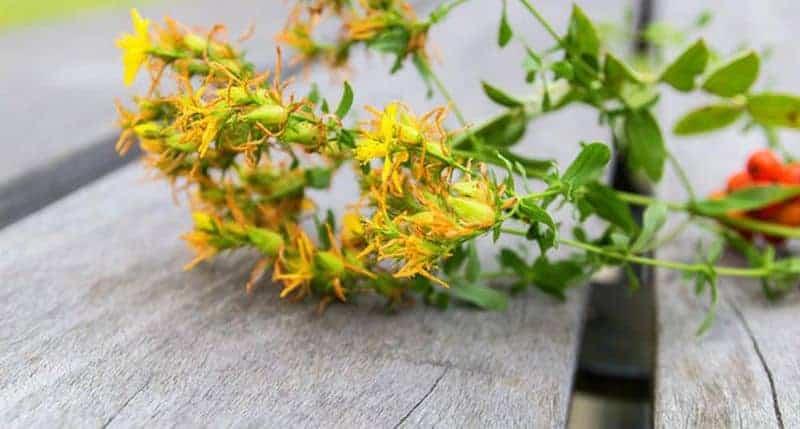 ветка с желтыми цветками