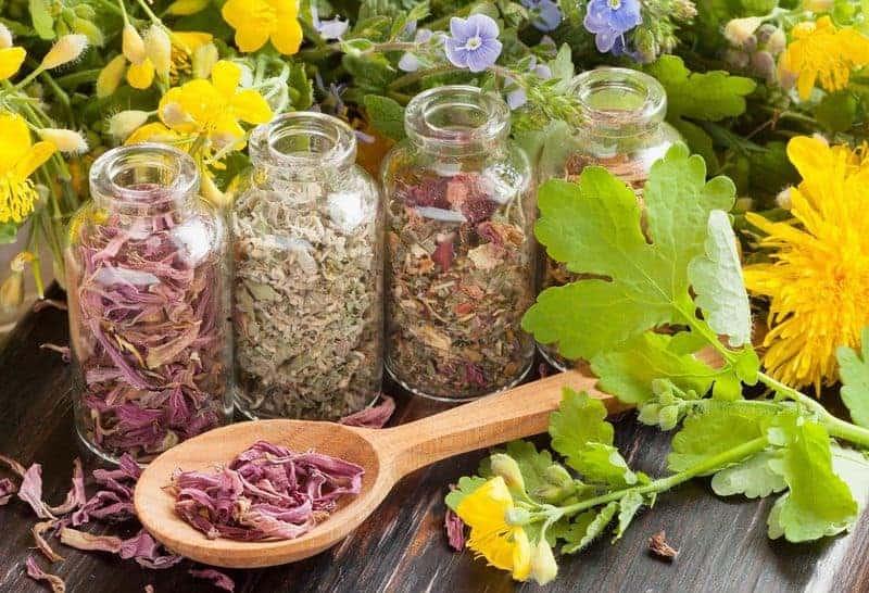 фитотерапия - лечение травами
