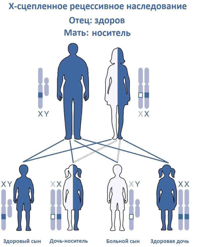 наследственность гемофилии