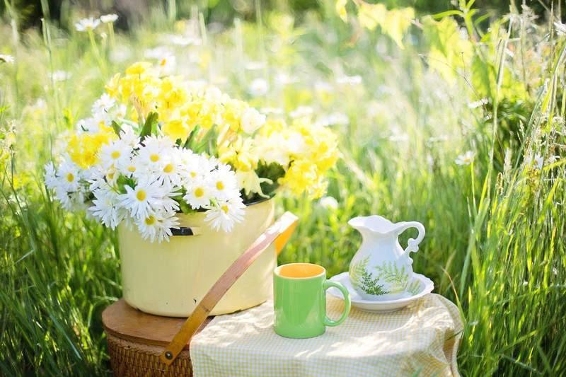 чаепитие на природе