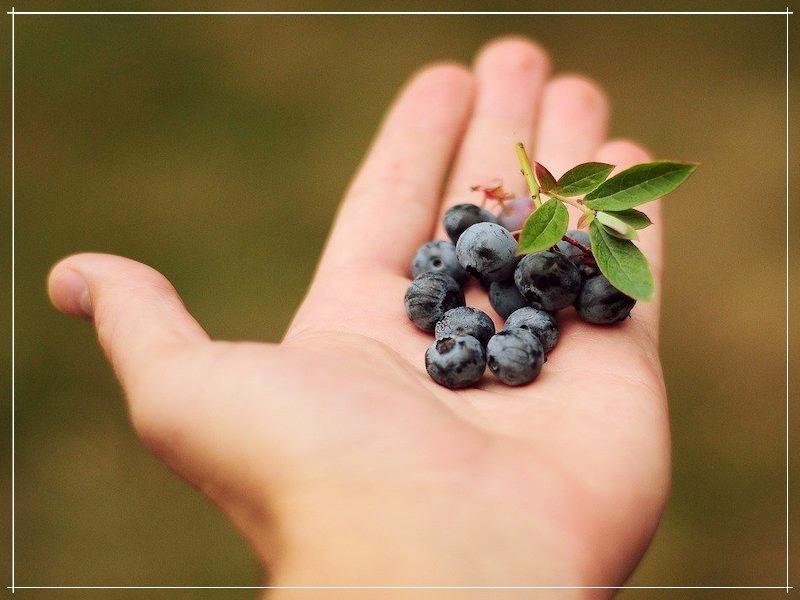листочек и ягодки