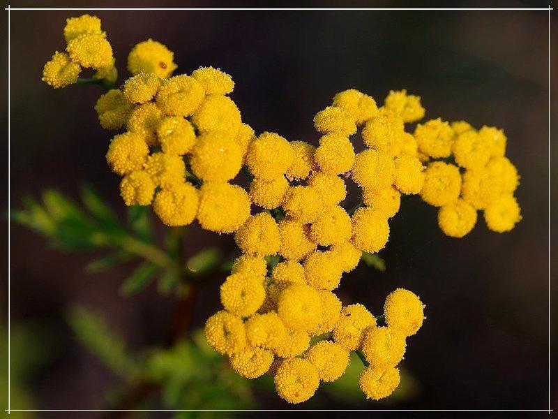 яркие жёлтые цветки
