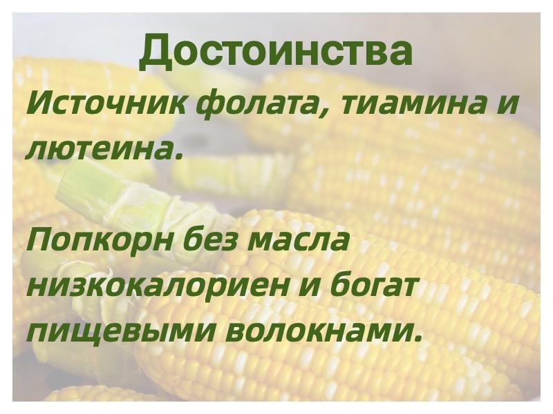 достоинства кукурузы