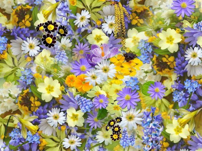 цветочные загадки
