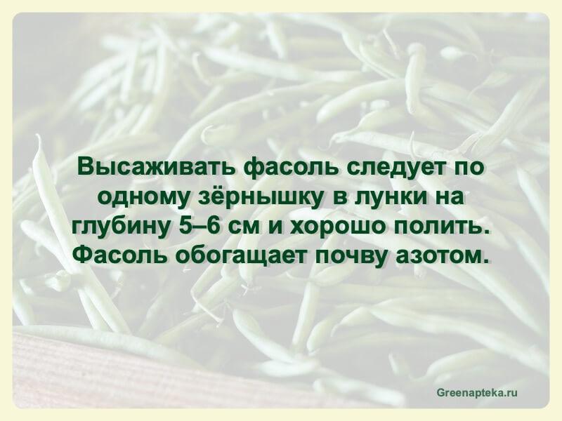 как садить фасоль
